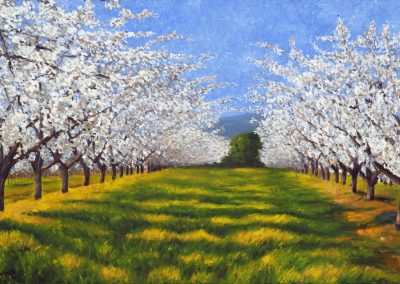 27 Blooming Cherry Trees – Price 1100 €