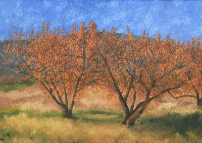 33 Cherry Trees In Autumn 1 – Price 1100 €