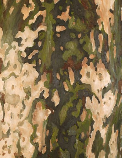 51 Plane Tree's Bark 1 – SOLD